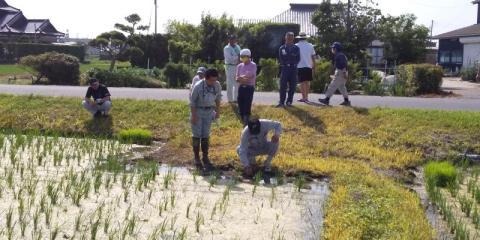 水田の雑草状況を確認しています。