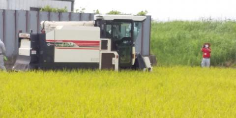 コンバインで稲刈りをしています。